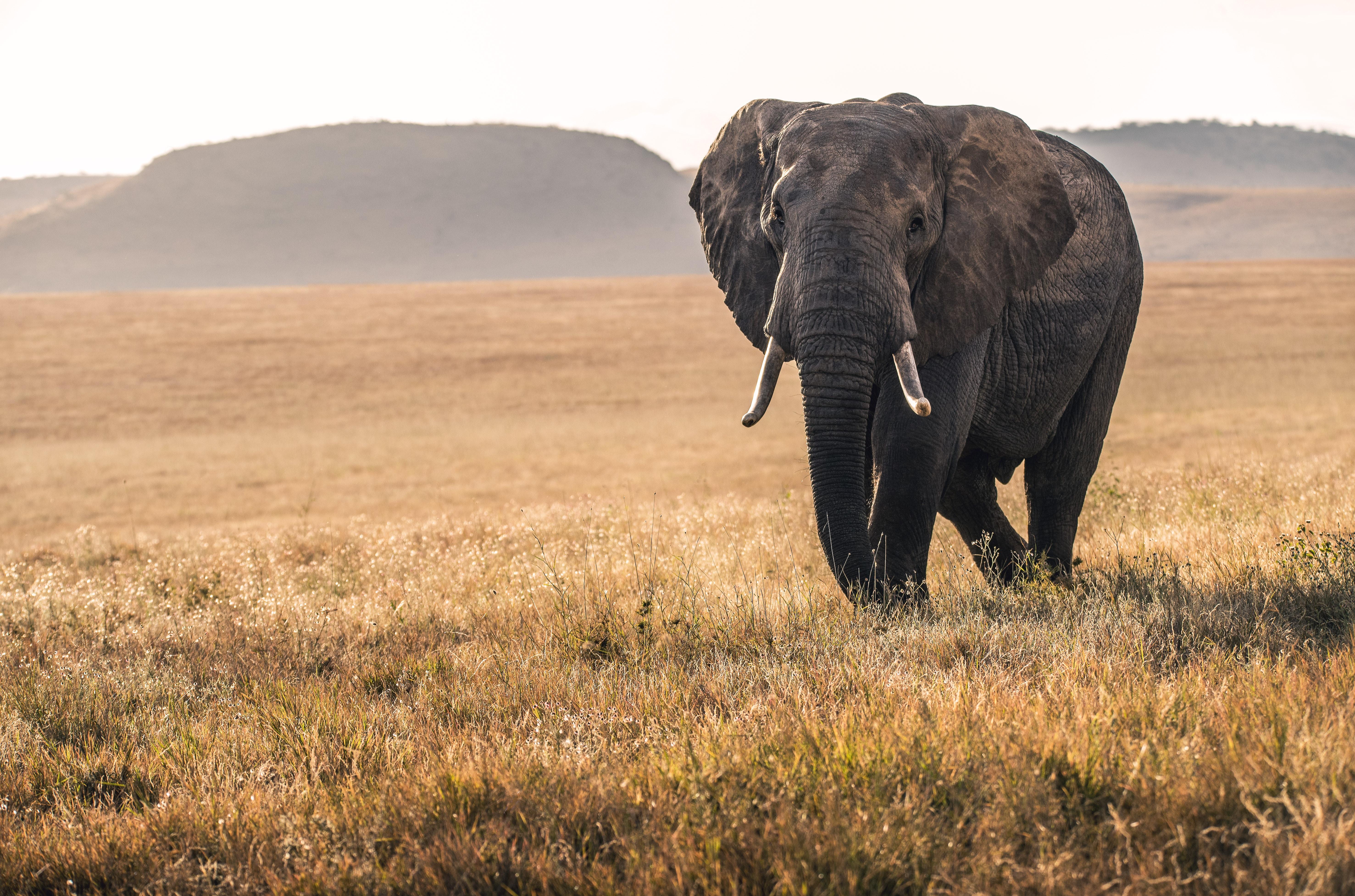 Grausamkeit gegen Elefanten