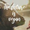 Gründe für ein veganes Leben- Ihr habt geantwortet!